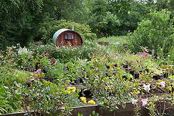 The nursery and gypsy caravan at Glebe Cottage in early July