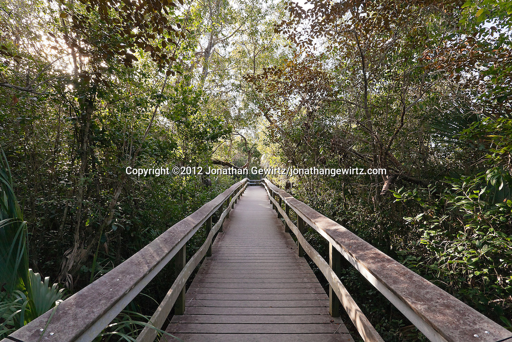 A wooden plank walkway through dense vegetation in Mahogany Hammock, Everglades National Park, Florida. WATERMARKS WILL NOT APPEAR ON PRINTS OR LICENSED IMAGES.