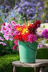 Bucket of cut autumn flowers ready to arrange. Dahlias and cosmos