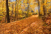 Country road covered with autumn leaves<br /> Fairbanks Provincial Park<br /> Ontario<br /> Canada