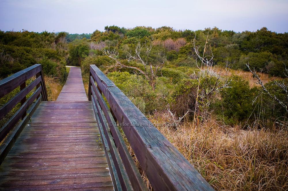 Boardwalk through the maritime scrub in Pawleys Island, South Carolina.