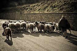 Corleto Perticara (PZ) 17.02.2009, Italy - Tempa Rossa - Speranze e realtà del giacimento Total in Basilicata. Nel territorio di Corleto Perticara, è ancora solito incontrare greggi di pecore, simbolo di una comunità ancora legata all'agricoltura e alla zootecnia. NELLA FOTO: Un pastore con il gregge.