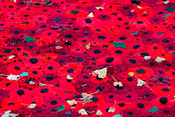 © Licensed to London News Pictures. 08/11/2018. Selby UK.Thousands of hand knitted poppies are flowing from the tower & in to the grounds of Selby Abbey in Yorkshire to mark the 100th Anniversary of the end of the First World War on the 11th of November. Photo credit: Andrew McCaren/LNP