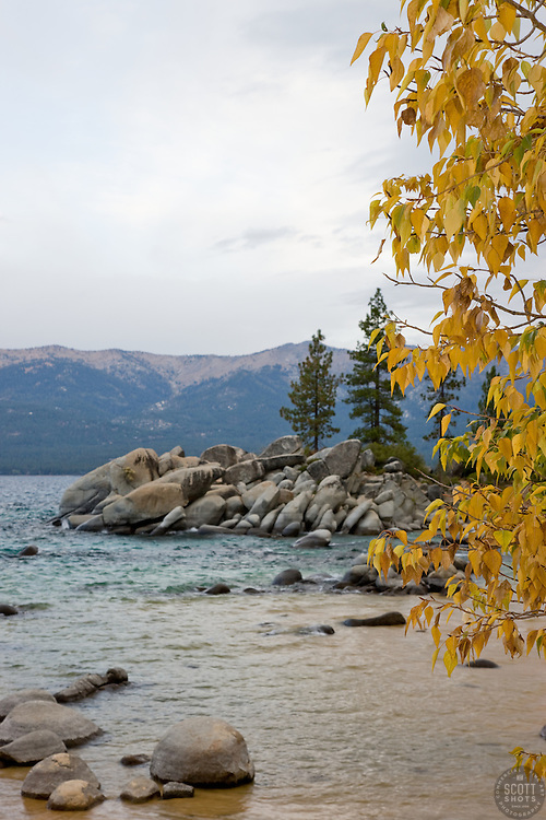 """""""Sand Harbor in Autumn"""" - This cottonwood tree was photographed at Sand Harbor, Lake Tahoe."""