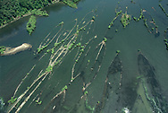 The ships on the bottom of Mallows Bay South of Washington in the Potomac River.<br />Photo by Dennis Brack