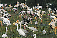 Birds at Bharatpur, India