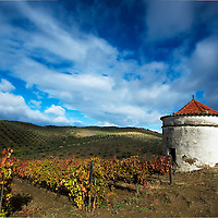 White dovecote at a vineyard at Northern Portugal