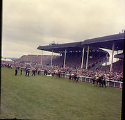 """30/06/1962 <br /> 06/30/1962<br /> 30 June 1962<br /> Irish Sweeps Derby at the Curragh Racecourse, Co. Kildare. general view of the  parade in front of the reserved enclosure for the Derby. The horses were shown and mounted on the course. From right to left are: """"Arctic Storm"""", W. Williamson up; """"London Gazette"""", G. Starkey up; """"Saint Denys"""" P. Canty up; """"Larkspur"""" A Breasley up"""