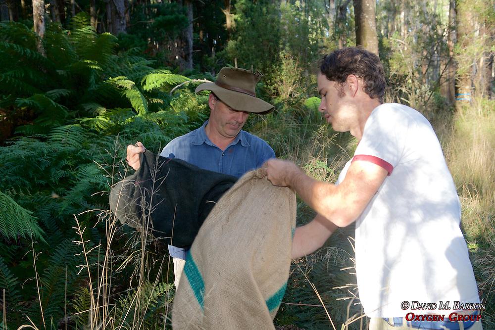 David & Sam Transfering Possum From Trap To Burlap Bag