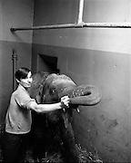 03/01/1969.01/03/1969.03 January 1969.Elephant at the Gaiety Theatre, Dublin.