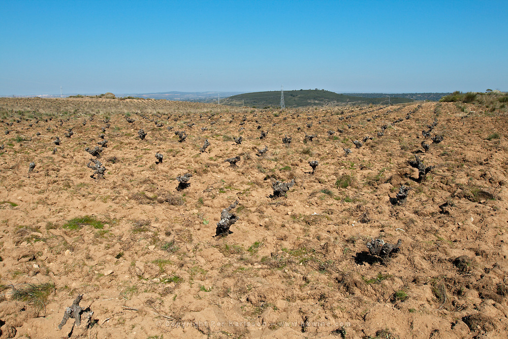 sandy soil, vineyard Bodega La Setera, DO Arribes del Duero spain castile and leon