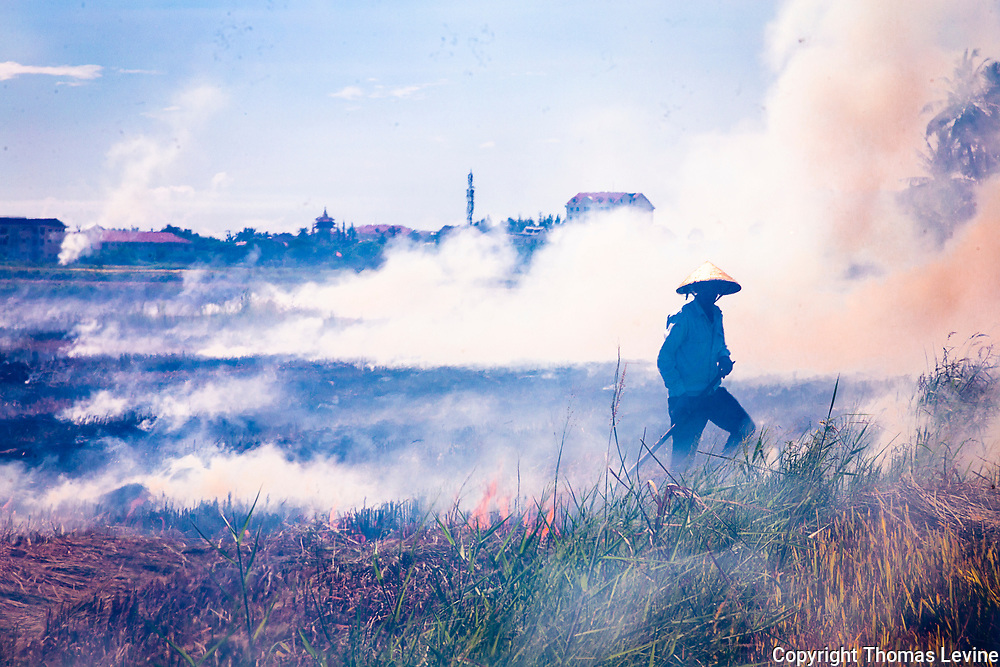 Rice farmer walks in his rice fields as straw burns from slash and burn teechniques prevail.