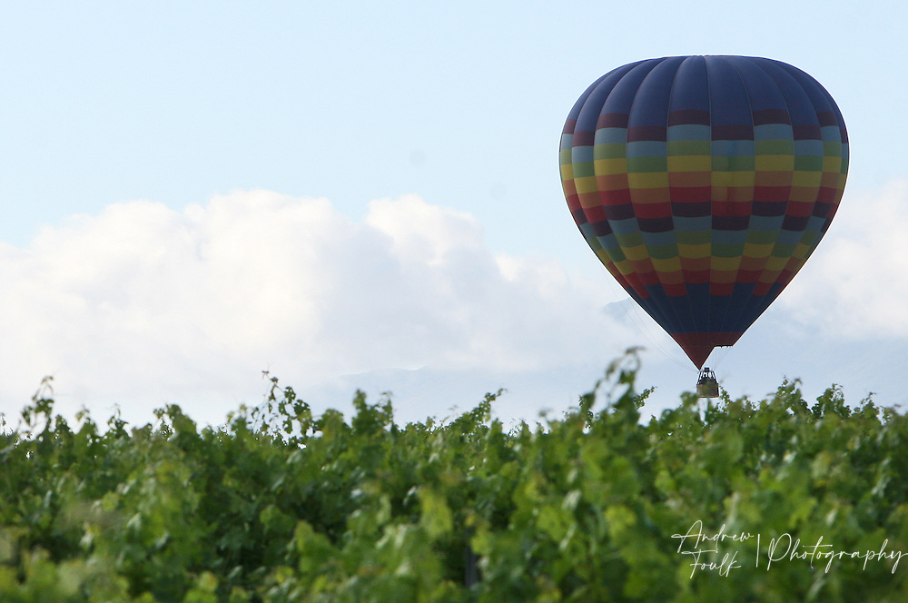 /Andrew Foulk/ For The Californian/.A lone hot air balloon takes to the air from the middle of a winery Saturday morning , during the 26th annual Temecula Balloon and Wine Festival.