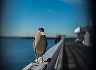 Redondo Sportfishing Pier<br /> Redondo Beach, California