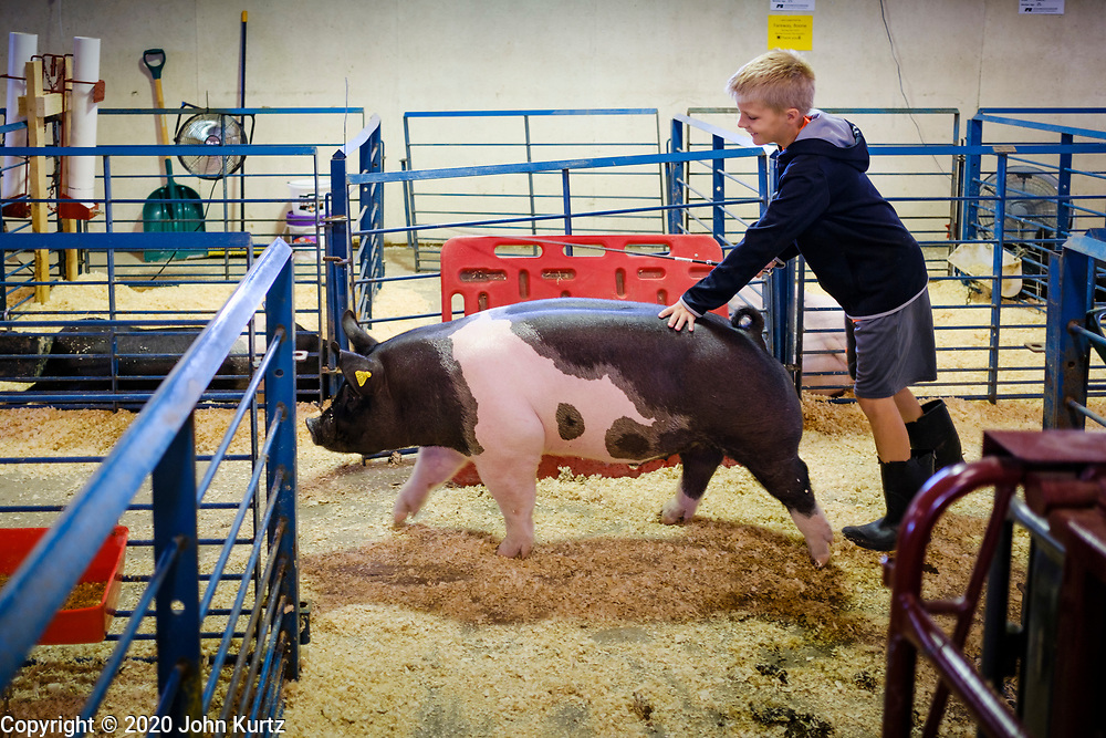 16 JULY 2020 - BOONE, IOWA: SAM CHESNUT, 11, exercises his market hog in the pig barn on the first day of the Boone County Fair in Boone. Summer is county fair season in Iowa. Most of Iowa's 99 counties host their county fairs before the Iowa State Fair. In 2020, because of the COVID-19 (Coronavirus) pandemic, many county fairs were cancelled, and most of the other county fairs were scaled back to concentrate on 4H livestock judging. Boone county scaled back its fair this year. The Iowa State Fair was cancelled completely. Boone County Emergency Management did not approve going ahead with the fair, and has advised anyone who goes to the fair to take precautions and monitor themselves for symptoms of the Coronavirus.           PHOTO BY JACK KURTZ