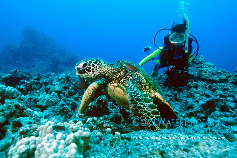 green sea turtle, Chelonia mydas, and scuba Diver, Kona, Big Island, Hawaii, Pacific Ocean
