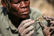 Botswana | Kalahari Desert