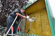 Nederland, Millingen, 27-7-2014Het jaarlijkse koningsschieten. Een belangrijk feest voor dit dorp, in de ooijpolder.De houten vogel wordt in de metalen bak geplaatst.Foto: Flip Franssen/Hollandse Hoogte