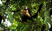 Pure Life of Costa Rica
