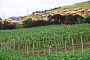 Carandai_MG, Brasil...Conjunto Habitacional (COHAB) Benjamim Pereira Baeta II com 108 casas...The Housing estates (COHAB) Benjamim Pereira Baeta II with 108 homes...Foto: JOAO MARCOS ROSA / NITRO
