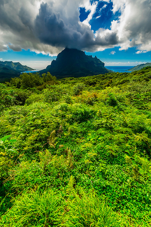 View of Cook's Bay from the Belvedere, island of Moorea, French Polynesia.