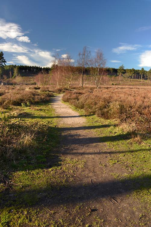 Farnham Heath RSPB Nature Reserve, Surrey