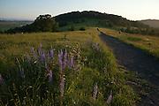 Baskett Slough National Wildlife Refuge, Oregon, hiker along Rich Guadagno Memorial National Recreation Trail