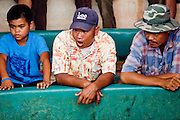 10 APRIL 2010 - PLA PAK, NAKHON PHANOM, THAILAND: Men watch and wager on cock fights in a pit in rural Thailand. The wagering continues with the odds continuously changing through the fight. Cockfighting is enormously popular in rural Thailand. A big fight can bring the ring operator as much as 200,000 Thai Baht (about $6,000 US), a large sum of money in rural Thailand. Fighting cocks live for about 10 years and only fight for 2nd and 3rd years of their lives. Most have only four fights per year. Fighting cocks in Thailand do not wear the spurs or razor blades that they do in some countries and most times the winner is based on which rooster stops fighting or tires first rather than which is the most severely injured. Although gambling is illegal in Thailand, many times fight promoters are able to get an exemption to the gambling laws and a lot of money is wagered on the fights. Many small rural communities have at least one cockfighting arena.   PHOTO BY JACK KURTZ