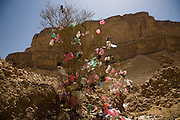 Plastic bags discarded after they were used for holding qat are blown by the wind and snagged on a desert bush near a qat market in BinAifan. Wadi Do'an, Hadhramawt, Yemen.