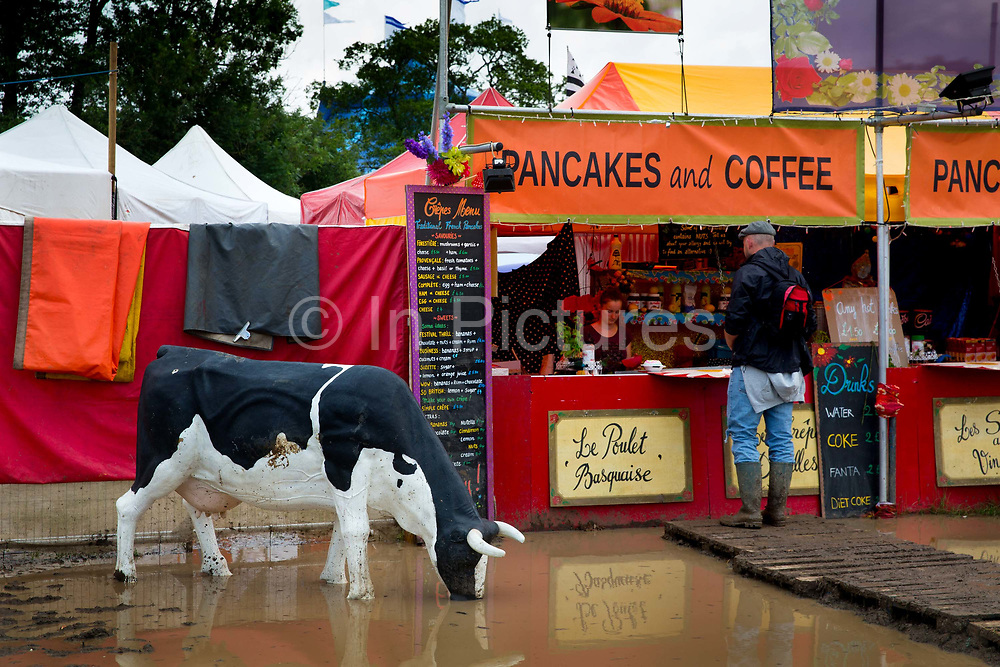 Model cow drinking in the West Holt field, Glastonbury Festival 2016. The Glastonbury Festival is the largest greenfield festival in the world, and is now attended by around 175,000 people. Its a five-day music festival that takes place near Pilton, Somerset, United Kingdom. In addition to contemporary music, the festival hosts dance, comedy, theatre, circus, cabaret, and other arts. Held at Worthy Farm in Pilton, leading pop and rock artists have headlined, alongside thousands of others appearing on smaller stages and performance areas.