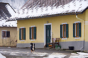 Easter in Southern Styria, Austria. Kitzeck in the snow. A border collie guarding his house.
