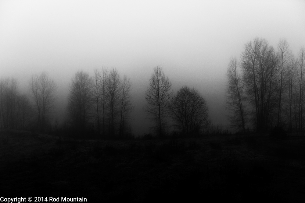 Trees extend along a riverbank on a misty foggy morning. Photo: © Rod Mountain