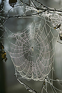 Orb Spider's web