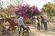 Mexican cowboys put up their horses after arriving to camp at a village stop along the road during the annual Cabalgata de Cristo Rey pilgrimage January 4, 2017 in La Sauceda, Guanajuato, Mexico. Thousands of Mexican cowboys and horse take part in the three-day ride to the mountaintop shrine of Cristo Rey stopping along the way at shrines and churches.