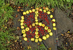 © Licensed to London News Pictures. 21/10/2013.  Hinkley Point, Somerset, UK.  Autumn fruit in the shape of a CND peace symbol, by Hinkley Point Nuclear Power Station, which currently comprises the decommissioned Hinkley A station with Magnox Reactors (blue square buildings) and Hinkley B station (grey building complex, a more modern AGR design). The UK Government today announced the go-ahead for a new nuclear power station at Hinkley Point C in Somerset, to be built by a consortium with French firm EDF Energy and Chinese investment for the first time in UK nuclear power generation.21October 2013.<br /> Photo credit : Simon Chapman/LNP