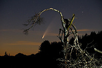 Comet Neowise flying high over Hatchet Pond in the New Forest  photo by Michael Palmer