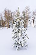 Fresh powder in the Ansel Adams Wilderness, Sierra Nevada Mountains, California USA