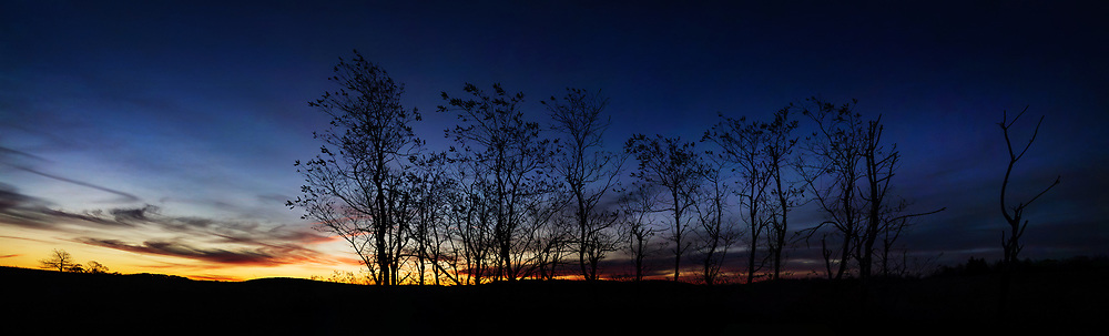 The sun rises over a copse of trees at Big Meadows in Shenandoah National Park.