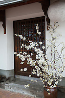 Sakura or cherry blossom arrangement in front of a kura or safe-house which were used for storage but nowadays often renovated into boutiques and cafes.
