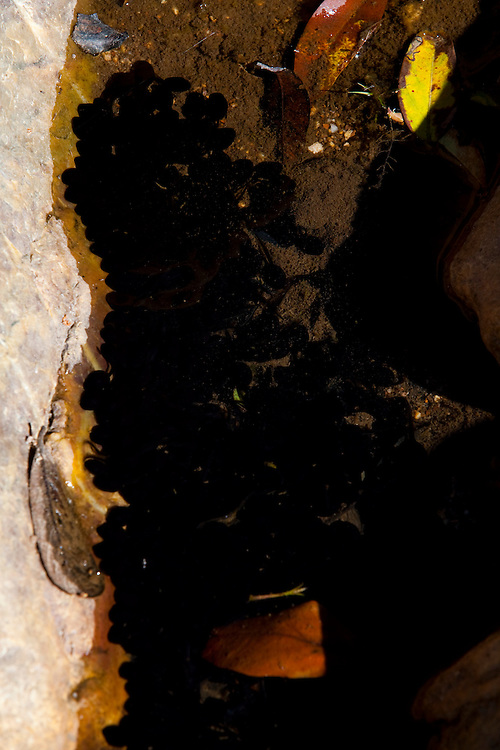 Sao Roque de Minas_MG, Brasil...Paisagens da Serra da Canastra, onde nasce o Rio Sao Francisco, o rio da integracao nacional, Minas Gerais. ..The Sao Francisco river originates in the Canastra mountain range. It is an important river for Brazil, called the river of national integration, Minas Gerais...Foto: LEO DRUMOND / NITRO
