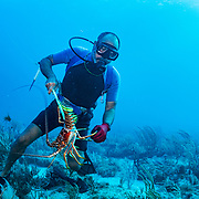 Commercial fisherman Andres Maldonado catches a Caribbean spiny lobster (Panulirus argus) off Cabo Rojo, Puerto Rico. He noticed drastic and obvious declines in fish numbers and habitat availbale after Hurricane Maria in 2017 which put many other commercial fisherman out of business. Image release available.