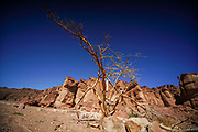 Solomon's Pillars, Timna Valley, Arava, Israel. The Timna Natural and Historic park is located in the southwestern Arava, some 30 km. north of the Gulf of Eilat.