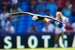 An eagle flys across Selhurst Park before kick off - Mandatory byline: Jason Brown/JMP - 07966386802 - 22/08/2015 - FOOTBALL - London - Selhurst Park - Crystal Palace v Aston Villa - Barclays Premier League