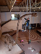 At the Zigong Dinosaur Mseum in the  Sichuan Province, chinese paleontologist Dong Zhiming studies the neck of a twenty-meter-long (65.67 ft) Omeisaurus from a bosun's chair.
