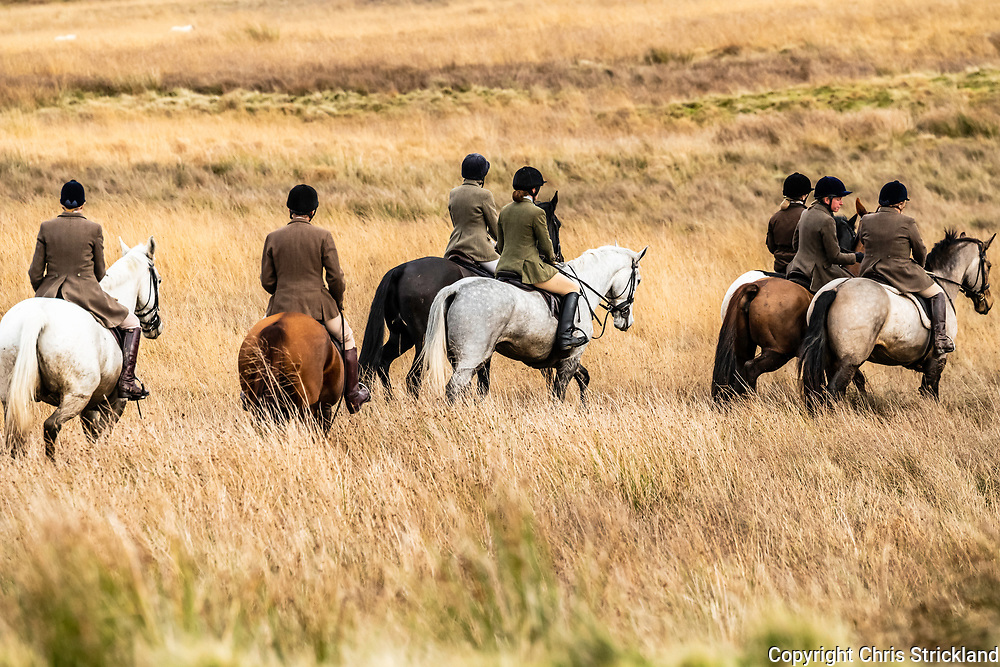 Roberton, Hawick, Scottish Borders, UK. 10th November 2018. The Duke of Buccleuch foxhounds flush foxes to guns in the Hawick hills. The areas economy is a mix of commercial forestry and sheep farming, the former acting as a reservoir for foxes.