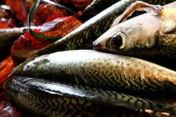 Dei grossi sgombri appena pescati fotografati dentro una pescheria del porto di Brindisi. Il proprietario si preoccupa di sistemarmerli perbene affinchè possa fotografarli in tutto il loro splendore. La luce del sole di fine maggio amplifica le venature blu e verdi di questo pesce.