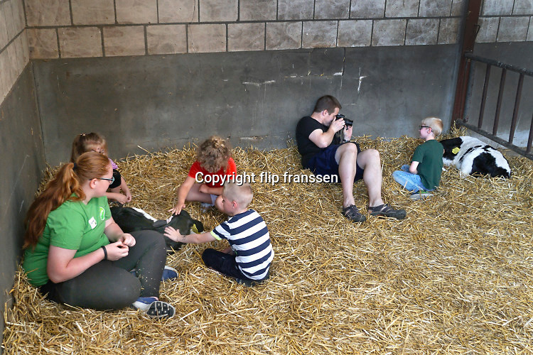 Nederland, Dreumel, 10-6-2019Koeien staan in de stal bij een melkveebedrijf. De dieren eten gras, hooi, kuilvoer. Er is een open dag georganiseerd door zuivelverwerker Friesland-Campina . Men kon o.a. kalfjes knuffelen, melkpakken vissen voor kinderen in de stal en koeien zelf voer geven .Foto: Flip Franssen