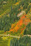 Fall color in Stevens Canyon, Mount Rainier National Park, Washington