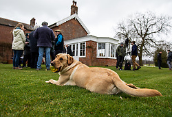 General view of Nicky Henderson dog as he's talking the media during the visit to Nicky Henderson's yard at Seven Barrows, Lambourn.