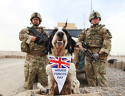 © London News Pictures. 24/06/11. Left to right - Corporal Steve Page (30) from Kirkculdy serving with the Royal Military Police. Air Dog Memphis from the Working Dog Section based in Camp Bastion. Corporal Richie Salisbury (27) from Folkestone also serving with the RMP at the Regional Training Centre based in Lashkar Gah. Memphis poses after carrying out a area search with the RMP at the regional training centre prior to a graduation ceremony for the Afghan Uniformed Police (AUP). Mandatory credit Alison Baskerville/LNP